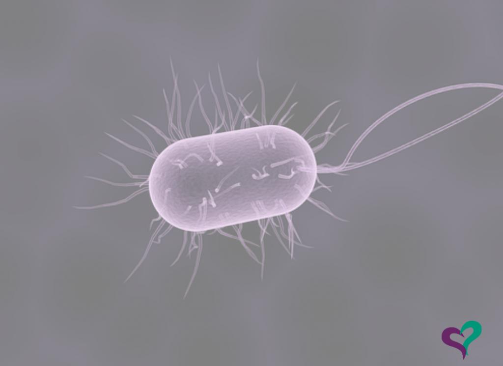 qué son los probióticos y los prebióticos