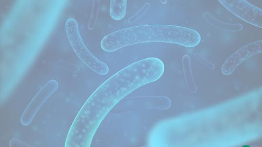 qué es el Lactobacillus rhamnosus GG